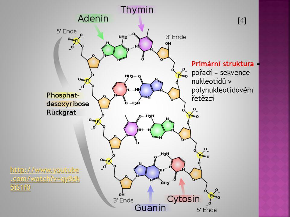 [4] Primární struktura = pořadí = sekvence nukleotidů v polynukleotidovém řetězci.
